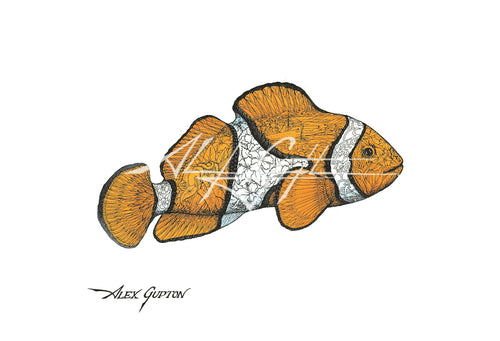 Clownfish (Swimming out of School Series I) Mini Canvas Giclee 8x10
