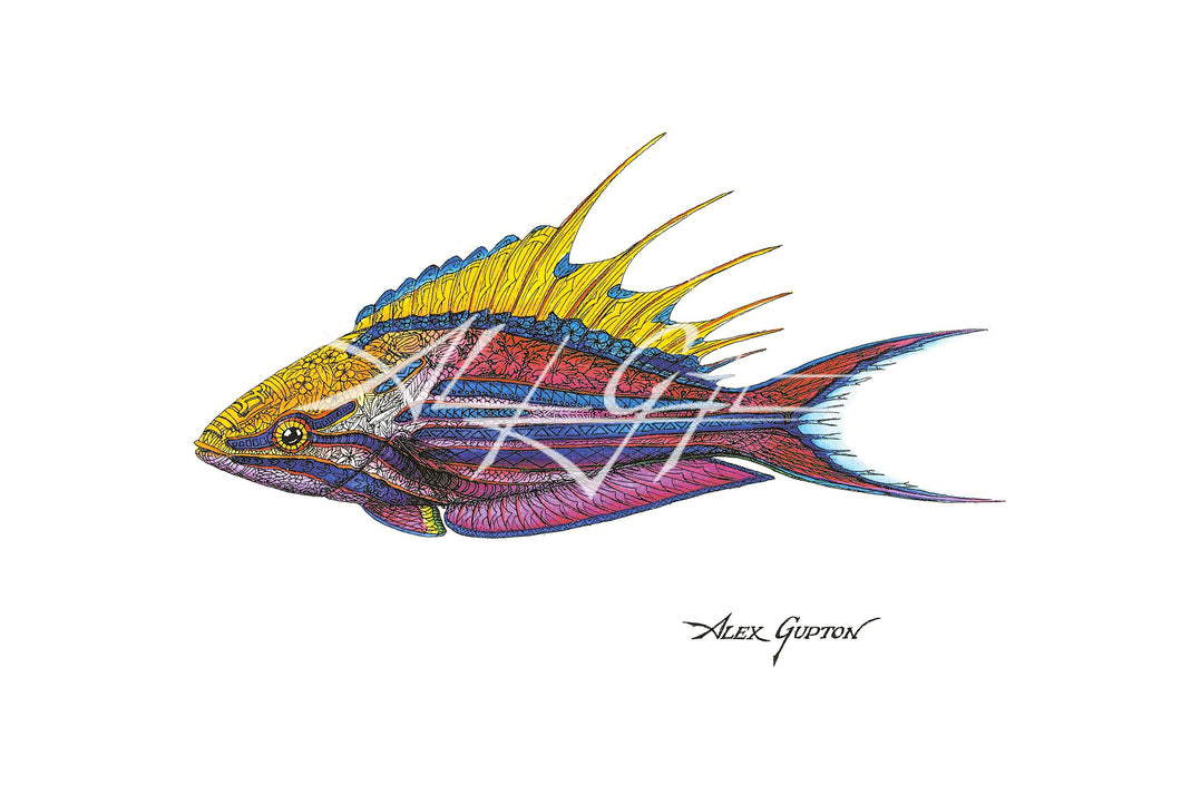 Filamentous Flasher Wrasse (Swimming out of School Series I) Mini Canvas Giclee 8x10