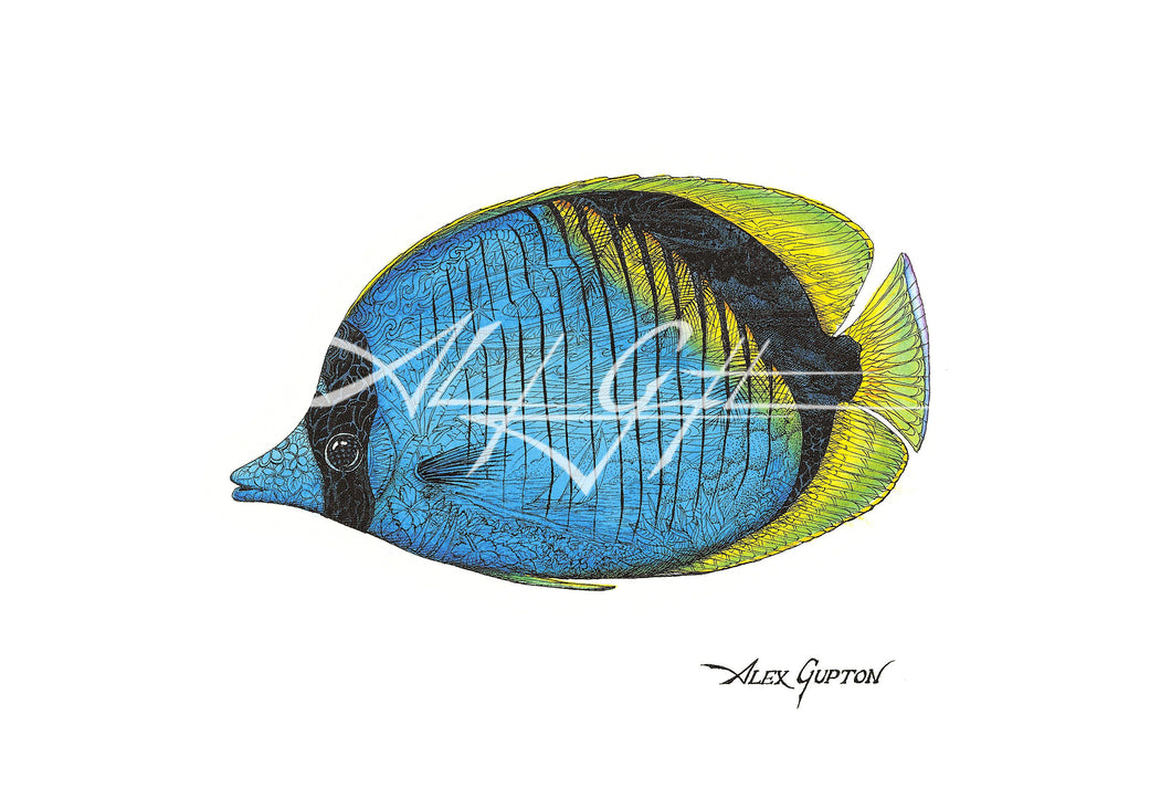 Lined Butterflyfish (Swimming out of School Series I) Mini Canvas Giclee 8x10