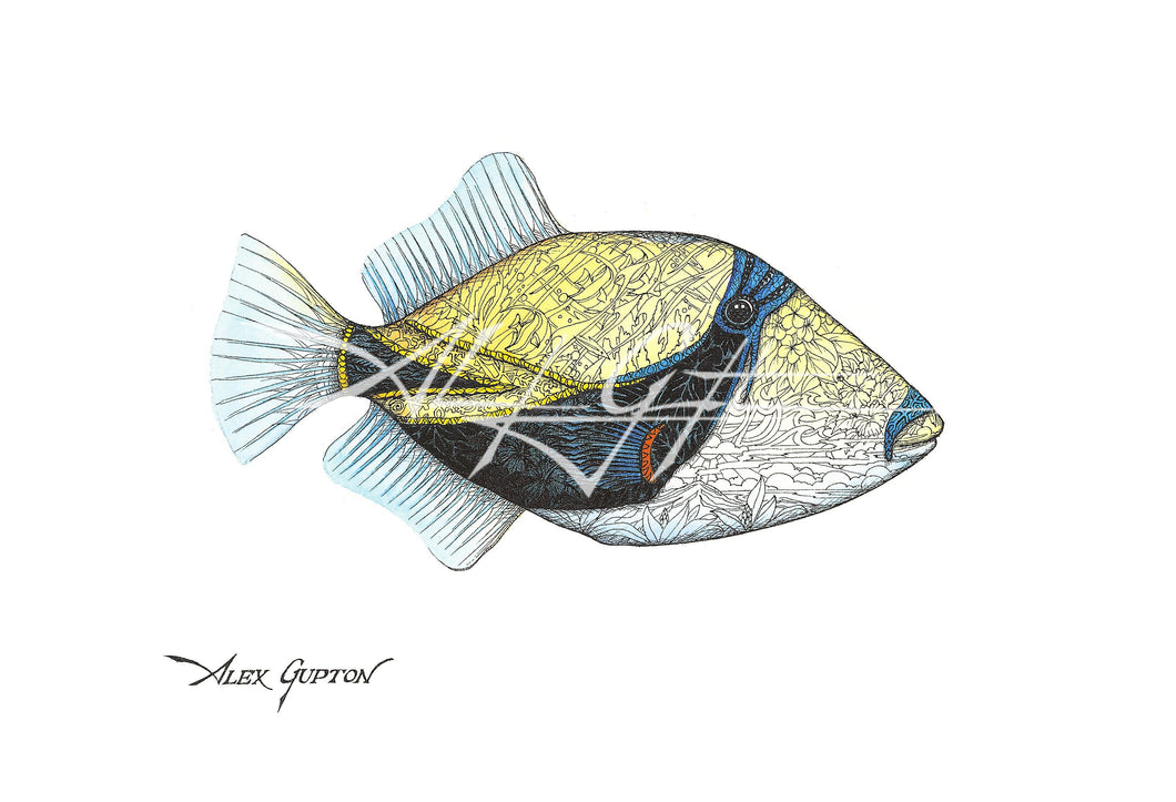 Picasso Triggerfish (Swimming out of School Series I) Mini Canvas Giclee 8x10