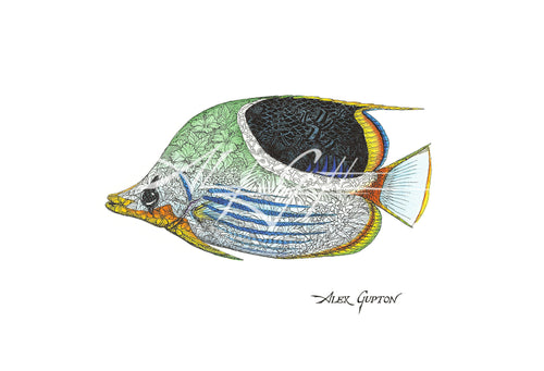 Saddleback Butterflyfish (Swimming out of School Series I) Mini Canvas Giclee 8x10