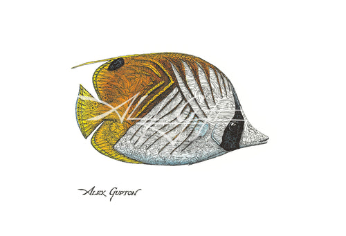 Threadfin Butterflyfish (Swimming out of School Series I) Mini Canvas Giclee 8x10