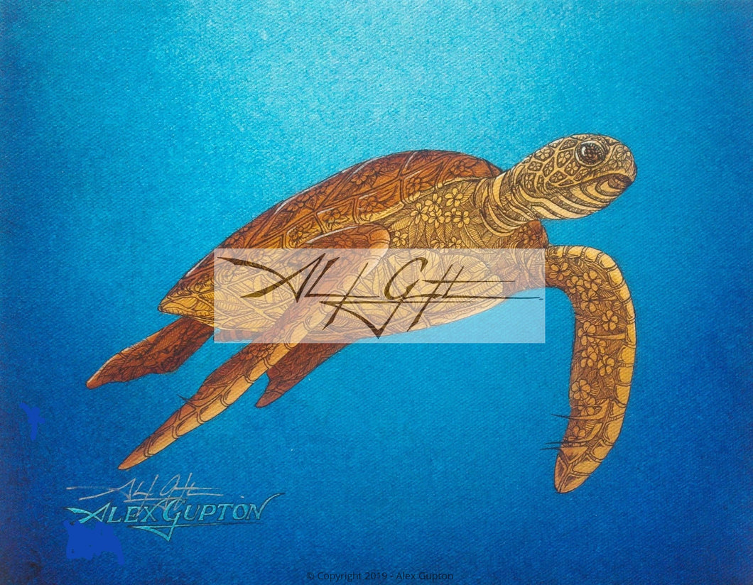 11x14 Paper Prints - Floating Honu