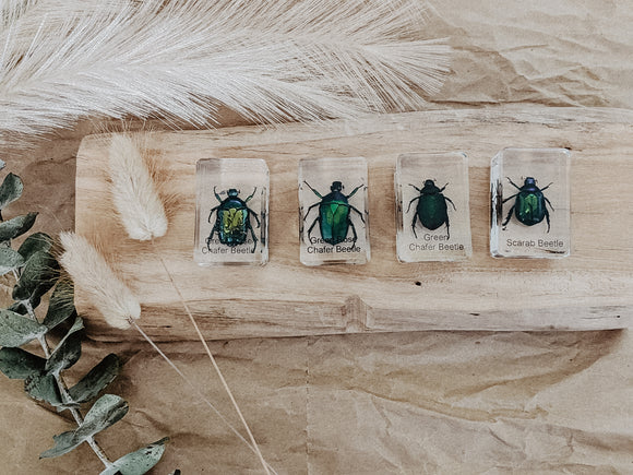 Bugs and Beetles Specimen Sets