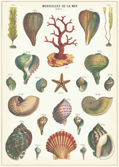 Cavallini Poster, Shell
