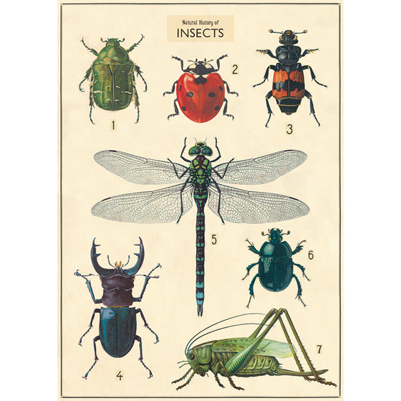 Cavallini Poster, Insects