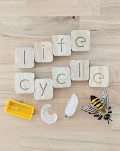 Life Cycle - Honey Bee