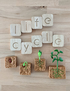 Life Cycle - Green Bean Plant