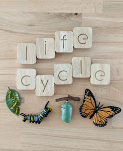 Life Cycle - Monarch Butterfly