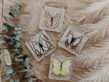 Butterfly Specimen Set