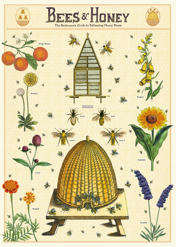 Cavallini Poster, Bees & Honey