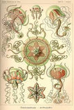 Art Forms in Nature, by Ernst Haeckel - 22 pull out posters