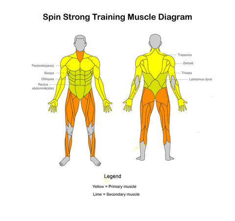 The Spin Strong Training Musclle Diagram