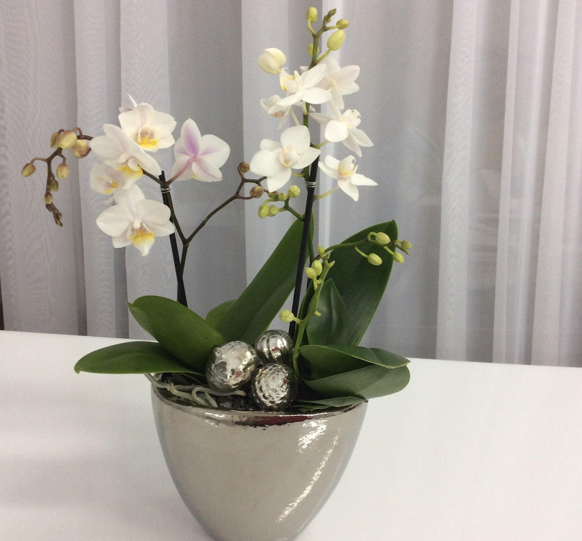 Holiday Orchid Garden