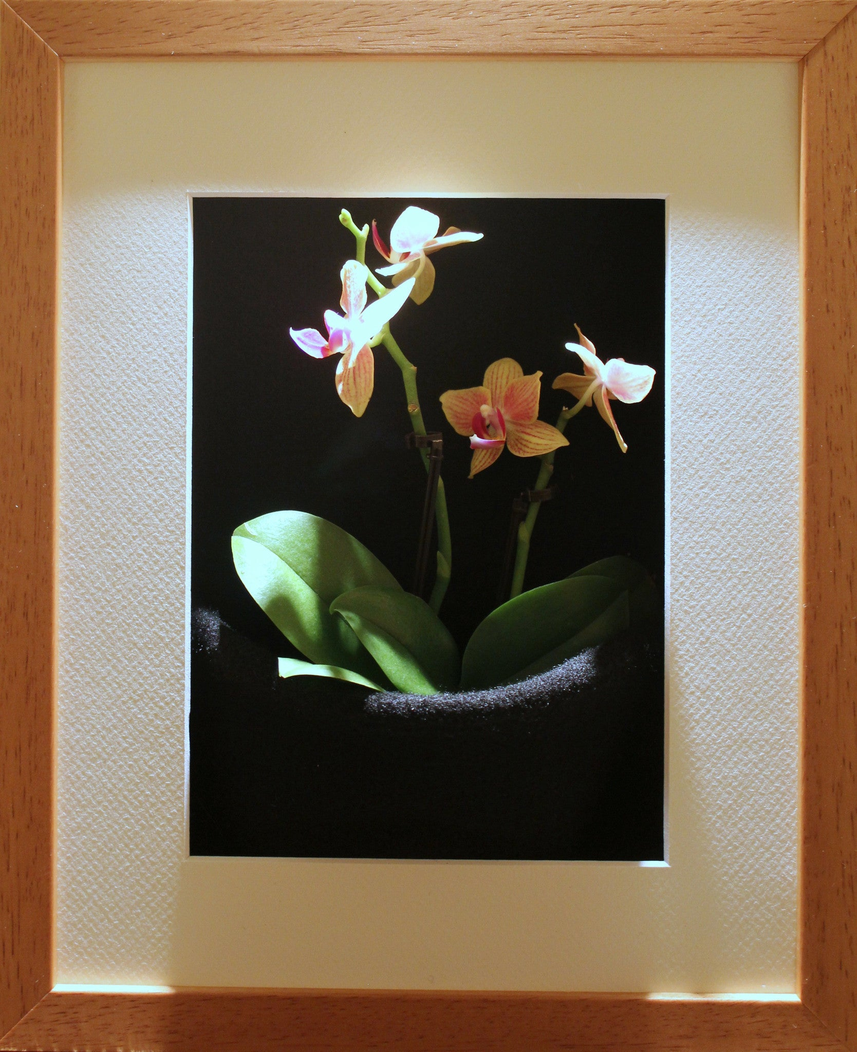 Live Orchid Picture