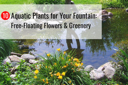 10 Aquatic Plants for Your Fountain: Free-Floating Flowers & Greenery