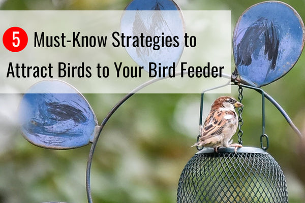 Learn more about the best strategies to attract birds to your bird feeder