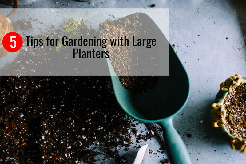 Learn about the best tips for planting flowers in large planters