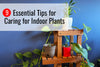 9 Essential Tips to Properly Care for Indoor Plants