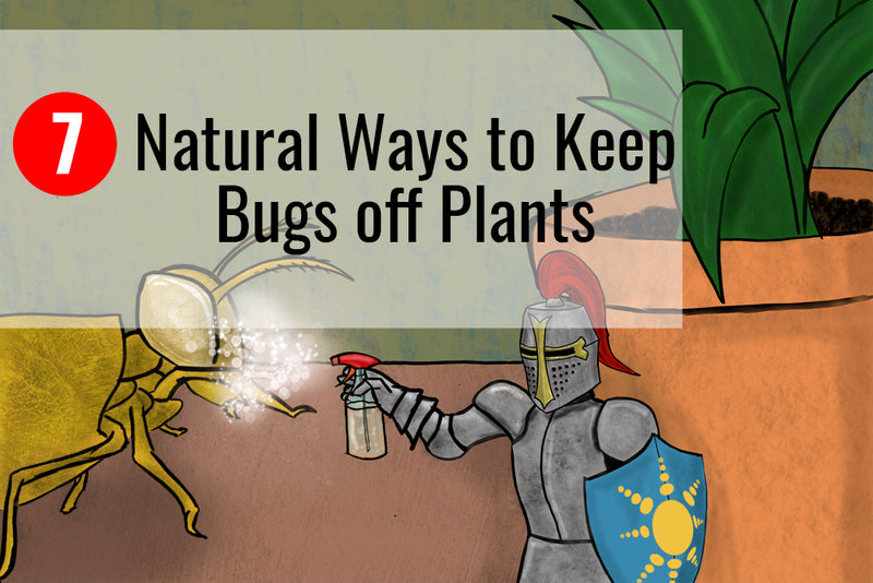 Learn more about the 7 natural ways to keep bugs off plants.
