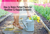 How to Water Potted Plants for Healthier & Happier Greenery