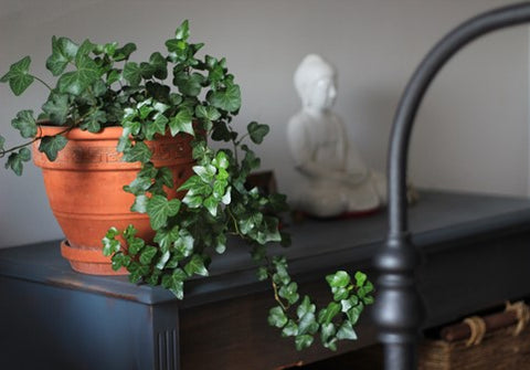 Indoor plant creates the wood element in your home.