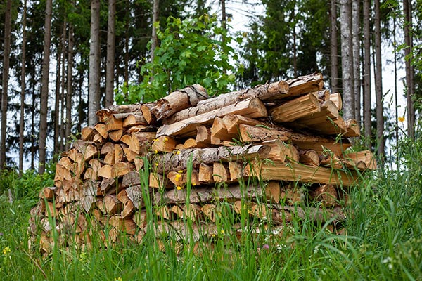 How to store firewood pile in the woods