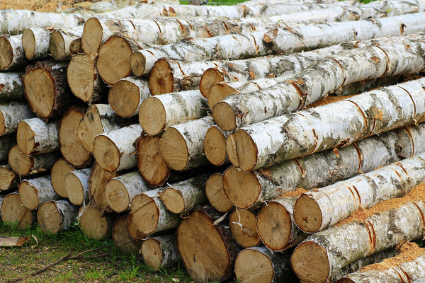 Birch wood is another fantastic firewood to burn for your fire.