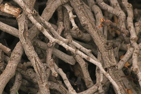 Start a fire in a fire pit by using dry, softwood kindling like these twigs.