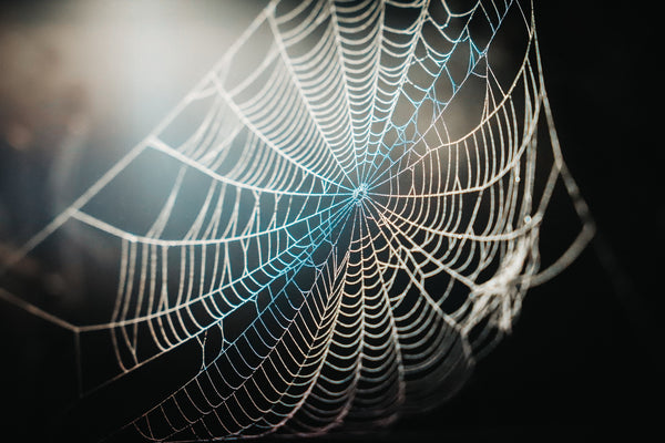 Spider webs are an excellent way to keep bugs off indoor plants.
