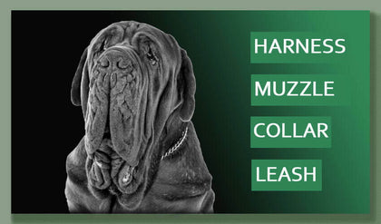 dog-collar-harness-muzzle-collection