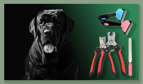 mastiff-dog-health-care-collection