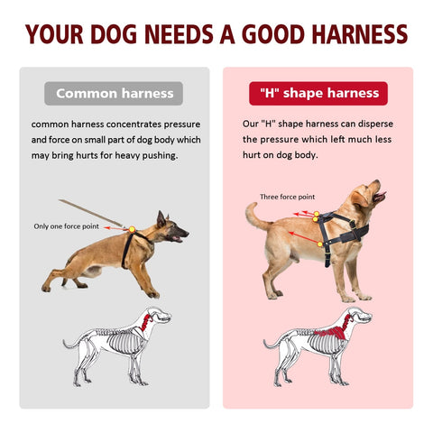protect your Mastiff spine with a good harness