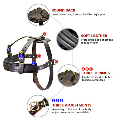 Three d rings on leather harness