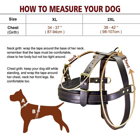 leather harness size information chart