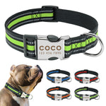 personalized bully collar