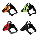 Mastiff Harness Collars