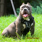 Reflective bully harness in 7 colors