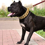 bully-dog-massive-collar