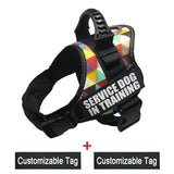 colorful dog harness for large breed dogs
