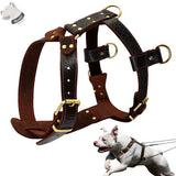 mastiff dog leather harness
