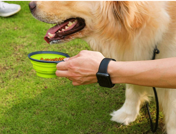 Portable Pet Bottle - 2 in 1 Pet Feeder