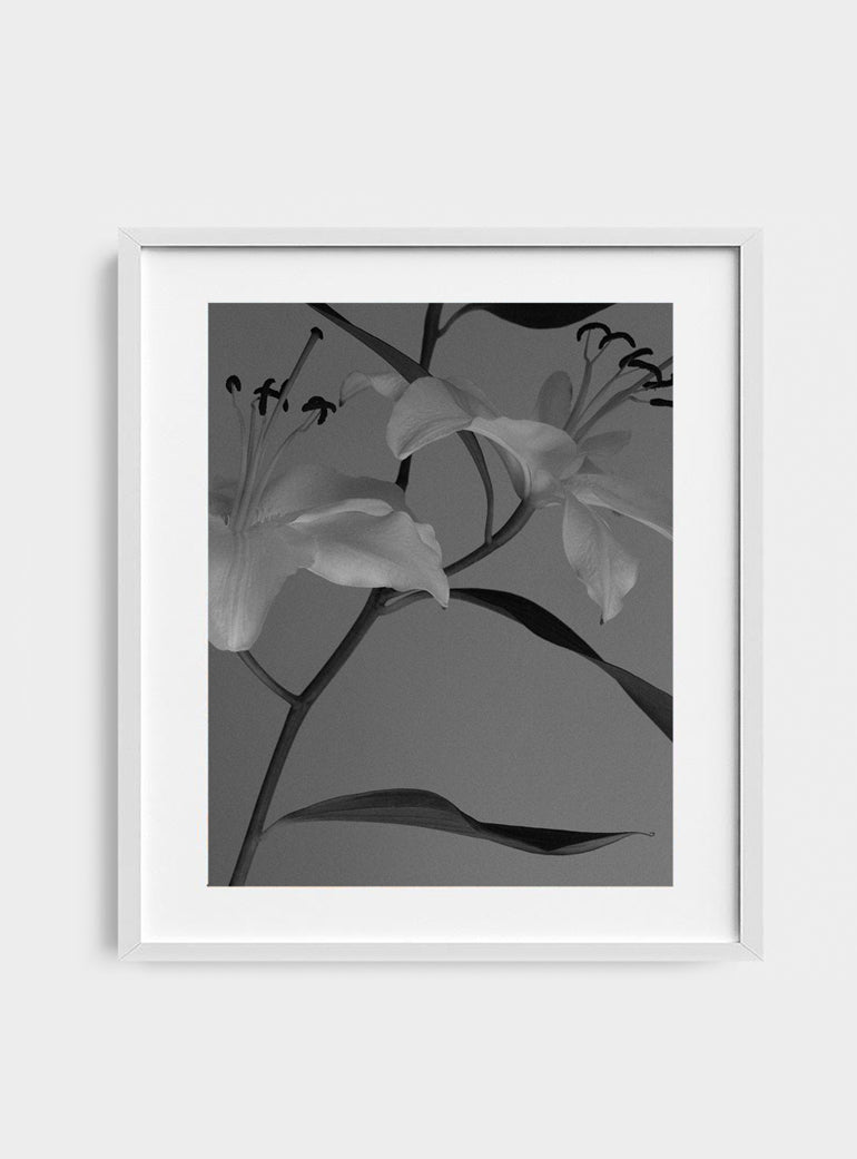 Lilies Photograph