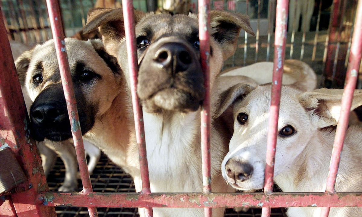 Kim Jong-un Seizes North Korean Dogs For Food - Punching ...
