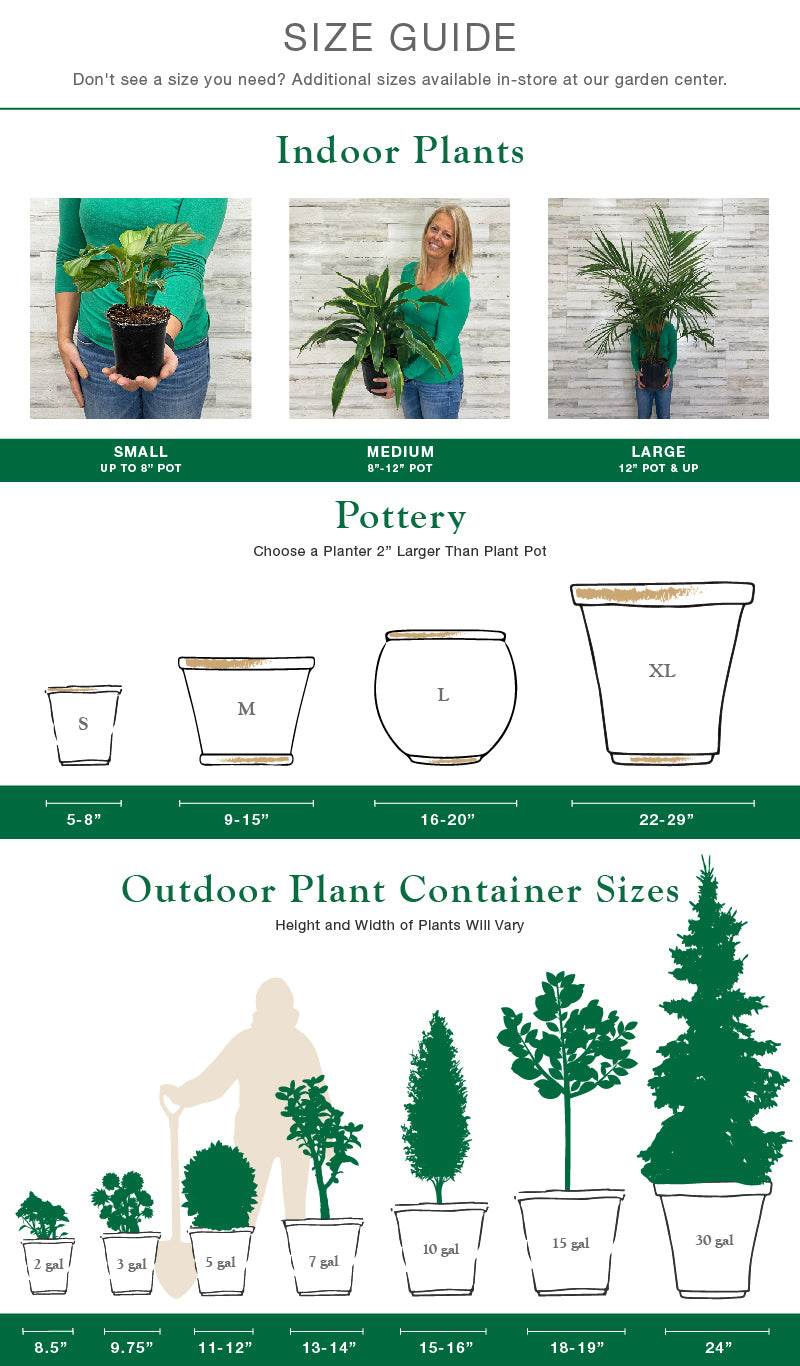 Hicks Plant Guide Size Chart