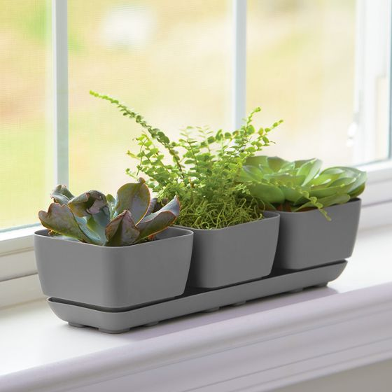 Herb Trio Planter Grey - 4-inches