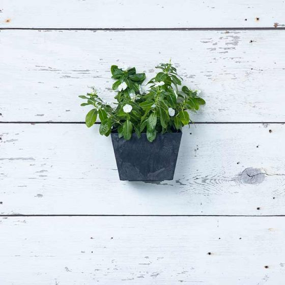 Ella Wall Pot - Black - 8.5-inches