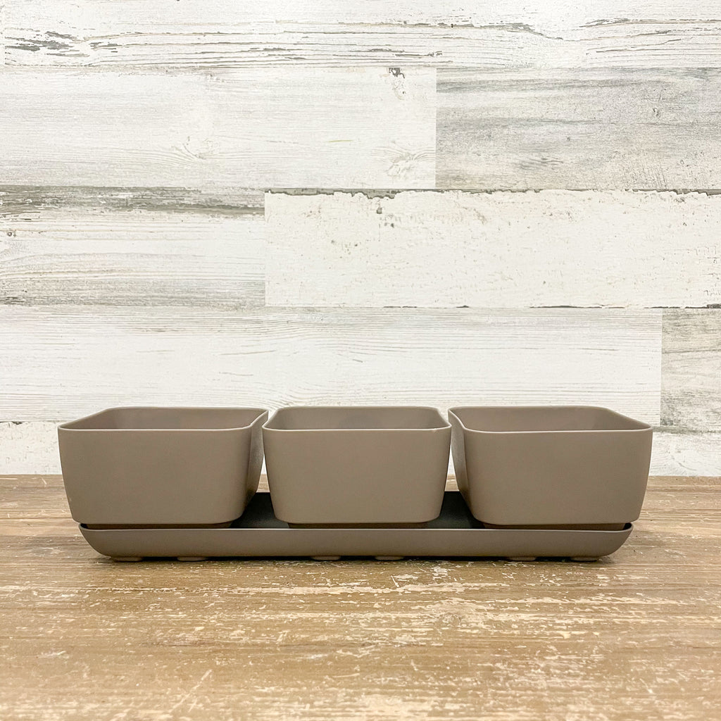 Herb Trio Planter Taupe - 4-inches
