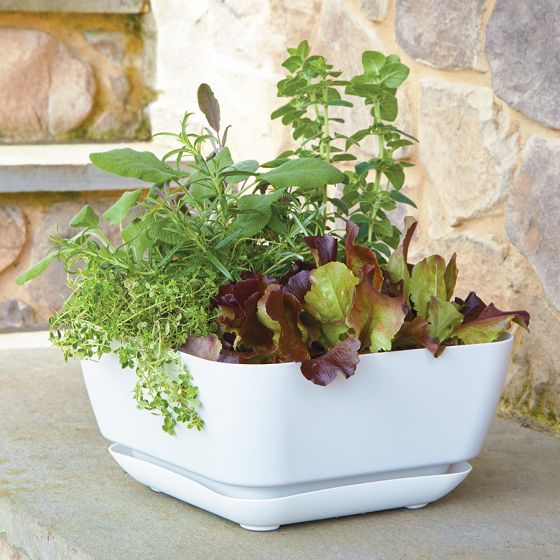 Garden Planter White - 12-inches