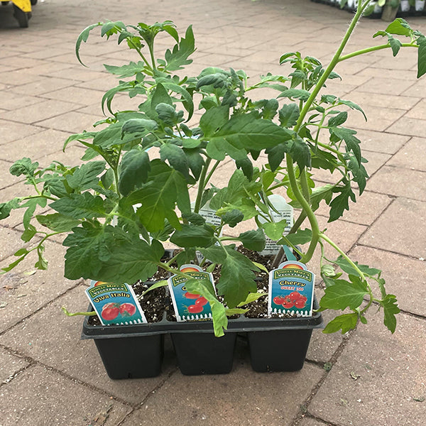 Uncle Mike's Tomato Garden - 6-Pack